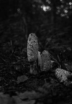 Photograph - Wild Mushrooms by Miguel Winterpacht