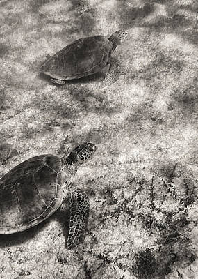 Photograph - Wild Sea Turtles In Akumal by For Ninety One Days