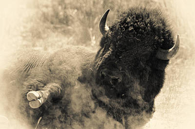 Wild West Bison Print by Andy-Kim Moeller