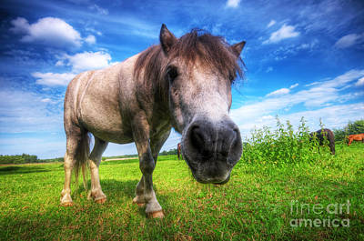 Pony Photograph - Wild Young Horse On The Field by Michal Bednarek