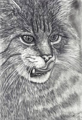 Wildcat Art Print by Kerstin Schroeder