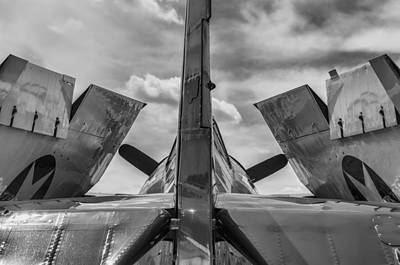 Hellcat Photograph - Wildcat by Nathan Gingles