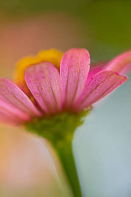 Wildflower - Bali Art Print by Matthew Onheiber