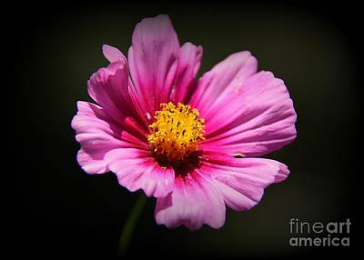 Photograph - Wildflower by Lisa L Silva