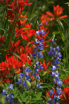 Photograph - Wildflowers Mixed 5 by Robert Lozen