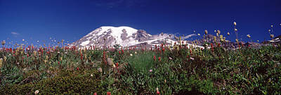 Wildflowers On Mountains, Mt Rainier Art Print