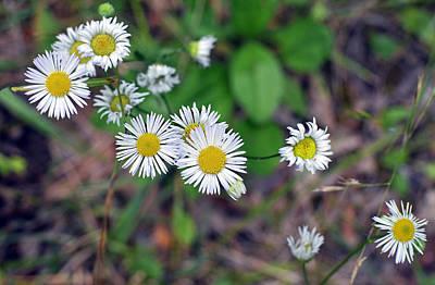 Update Digital Art - Wildflowers by Paul Pecora