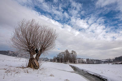 Willow Tree Photograph - Willow by Davorin Mance