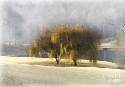Painting - Willow Fog  by Cris Hayes