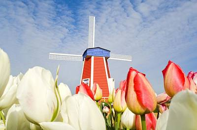 Woodburn Photograph - Windmill And Tulips At Wooden Shoe by Dan Sherwood