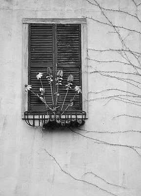 Photograph - Window Dressing by Craig T Burgwardt