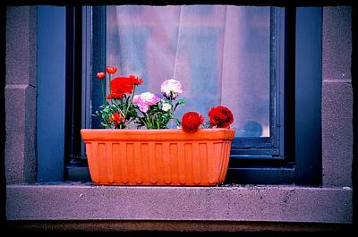 Photograph - Window Dressing by JAMART Photography
