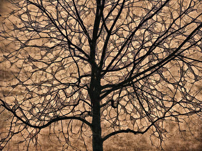 Windowpane Tree In Autumn Art Print by Carol Leigh