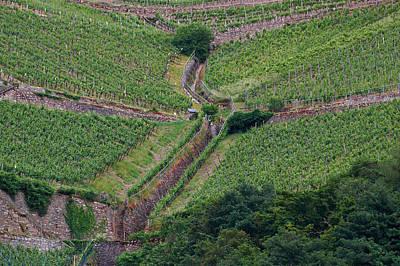 Wine Of Rhine Art Print by Jouko Lehto