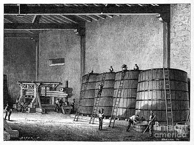 Pinot Noir Photograph - Wine Production, 19th Century by CCI Archives