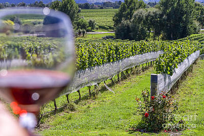 Hawkes Bay Photograph - Wineglass In Vineyard by Patricia Hofmeester