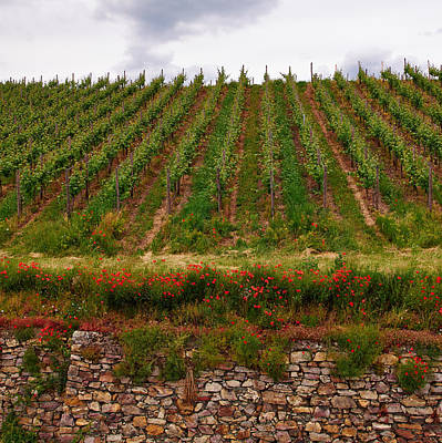 Photograph - Wineyards Of Rudesheim by Jouko Lehto
