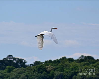 Art Print featuring the photograph Wings II by Carol  Bradley