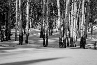 Photograph - Winter Aspens by Jack Bell