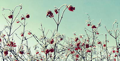 Photograph - Winter Berries by France Laliberte