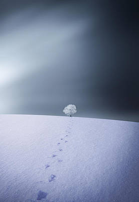 Hoar Frost Photograph - Winter by Bess Hamiti