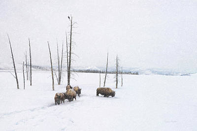 Buffalo Photograph - Winter Buffalo by Ramona Murdock