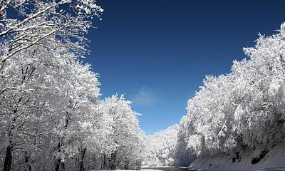 Photograph - Winter Day by Carolyn Postelwait