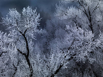 Winter Frost Art Print by Leland D Howard