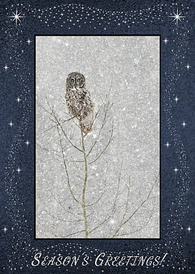 Photograph - Winter Ghost by Dee Cresswell