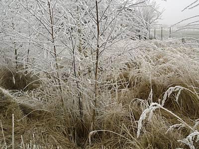 Winter Grass Art Print by Magdalena Mirowicz