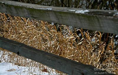 Photograph - Winter Grass by Susan Herber