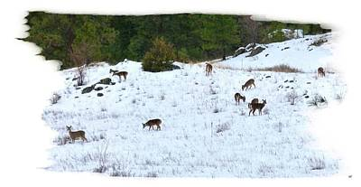 Photograph - Winter Grazing by Will Borden