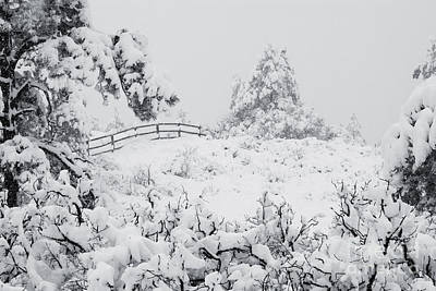 Photograph - Winter Landscapes by Steve Krull
