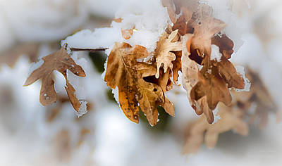 Photograph - Winter Leaves by Julie Palencia