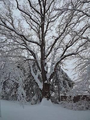 Photograph - Winter Oak by John Wartman