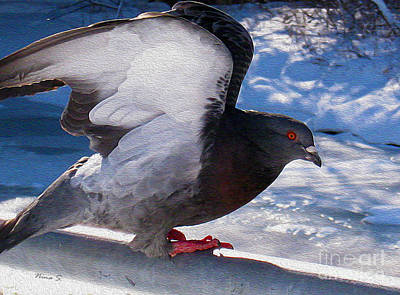 Photograph - Winter Pigeon 2 by Nina Silver