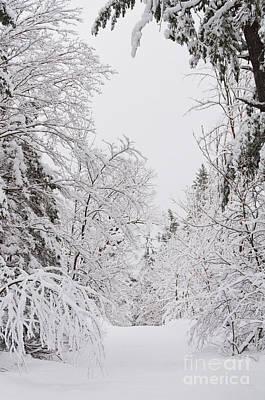Winter Road Art Print by Cheryl Baxter