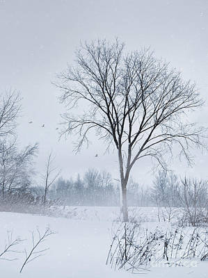 Photograph - Winter Rural Scene by Sandra Cunningham
