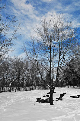 Photograph - Winter Scene by Celso Bressan