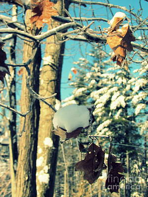 Photograph - Winter Scene by France Laliberte