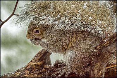 Brown Photograph - Winter Squirrel by LeeAnn McLaneGoetz McLaneGoetzStudioLLCcom