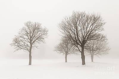 Snowy Photograph - Winter Trees In Fog by Elena Elisseeva
