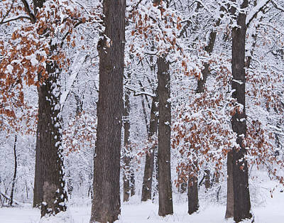 Winter Trees Art Print by Larry Bohlin