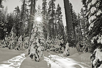 Photograph - Winter Wonderland - Badger Pass In Yosemite National Park by Jamie Pham