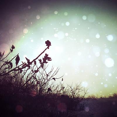 Sumac Flower Photograph - Winter's Magic by Natasha Marco
