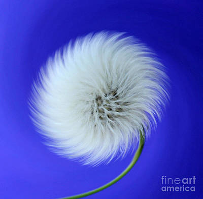 Flower Abstract Photograph - Wish In Blue by Krissy Katsimbras