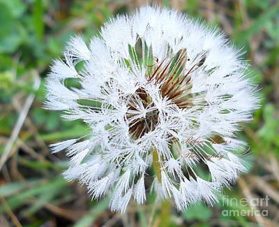 Photograph - Wish by Robin Coaker