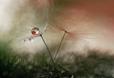Dew Photograph - With And Without by Heidi Westum