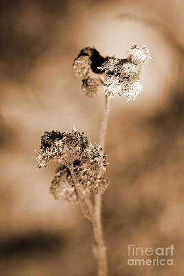 Duotone Photograph - Withering Weed by Jorgo Photography - Wall Art Gallery