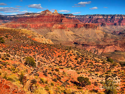 Grand Cayon Photograph - Within The Canyon by Tara Turner
